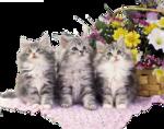 Кошки 5 0_50a00_65970faa_S