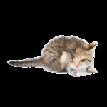 Кошки 5 0_50a1c_d7cb004_S