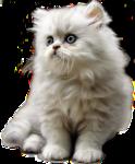 Кошки 5 0_5202c_2521c6e8_S