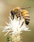 Бабочки & Пчелы