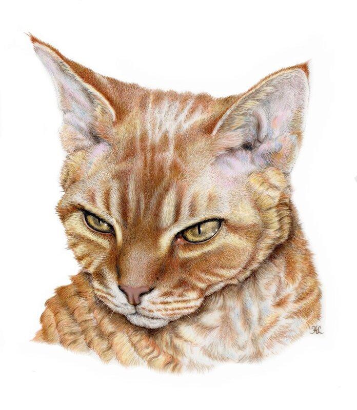 Кошачьи от Heather Lara
