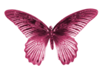 DBA BUTTERFLY 1.png