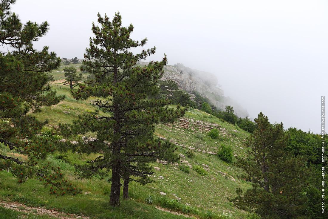 фото на горе Ай-Петри