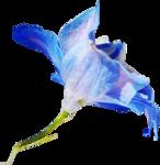ldavi-shadowedflowers-delphiniumorhat29.png