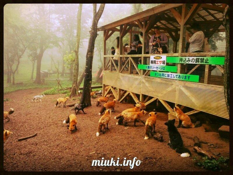 Дзао Кицунэ Мура - деревня лисиц в Японии