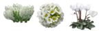flower (18).png
