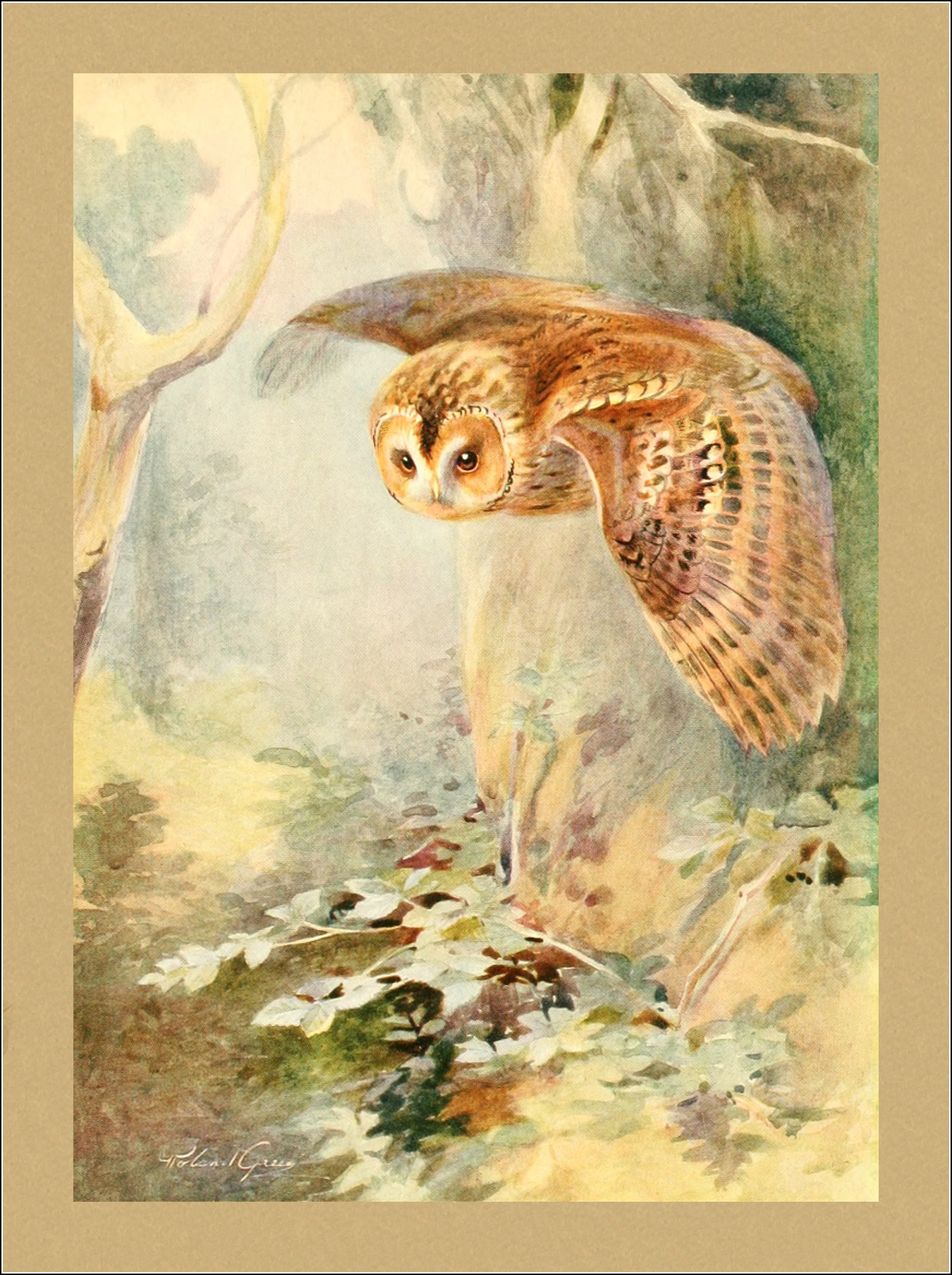 Roland Green, F.Z.S., Birds in flight
