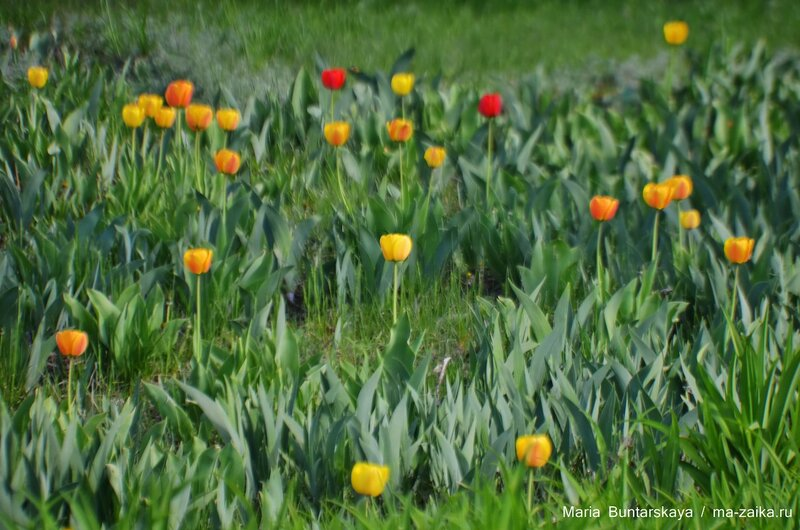 Цветочное великолепие, 03 мая 2015 года