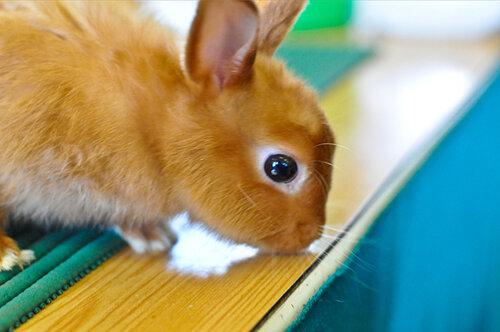 Выставка кроликов на Новинском