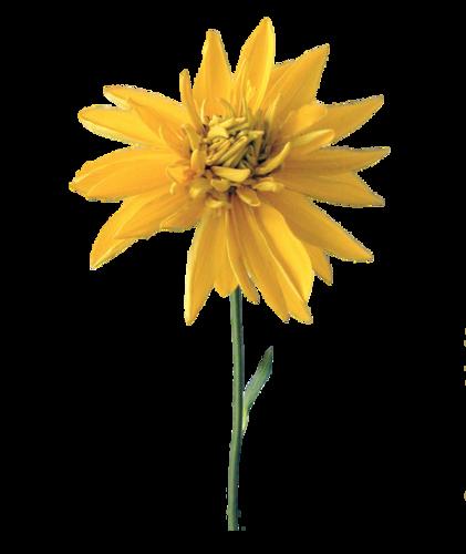 Полевые цветы 100 картинок на