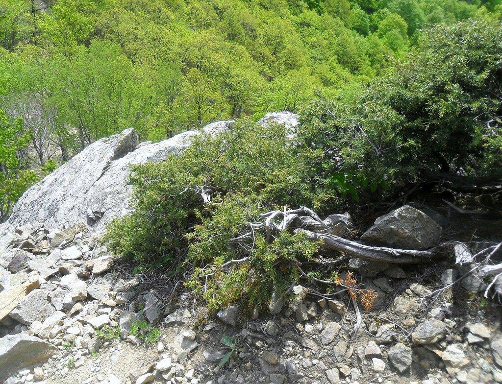 На скале ... SAM_6781.JPG