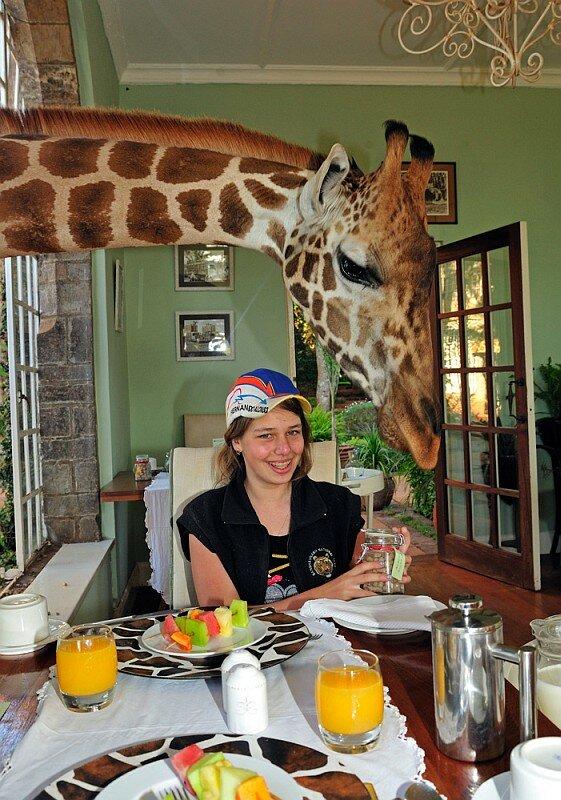 завтрак с жирафом :)
