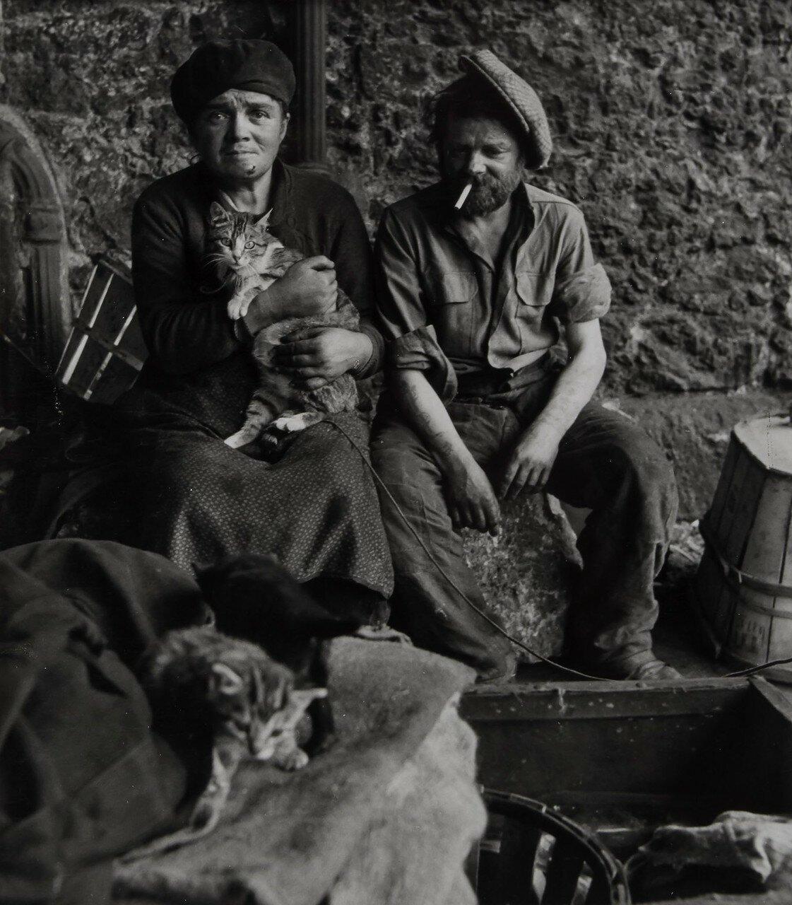1950. Кошки и клошары