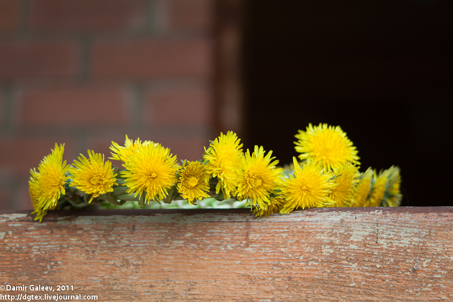 Весна – всё…