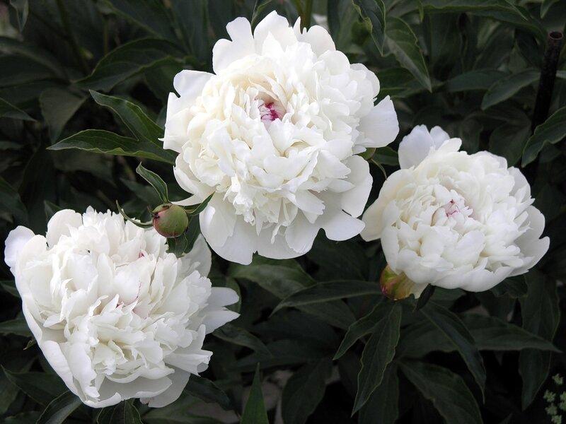 Красив цветок пока не сорван.... - Страница 2 0_7293b_2dab545f_XL
