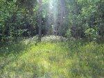 Похороны леса