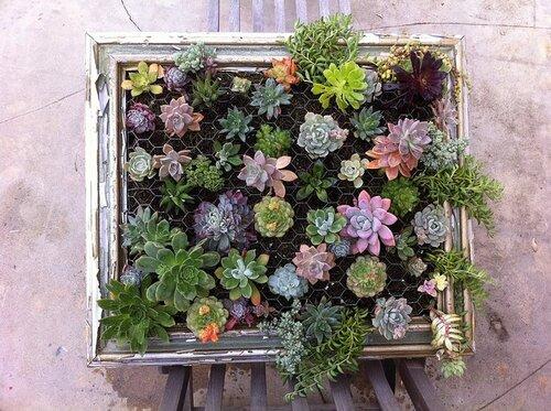Вертикальный сад из суккулентов