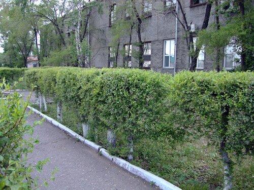 20110606 - Стрижка деревьев05
