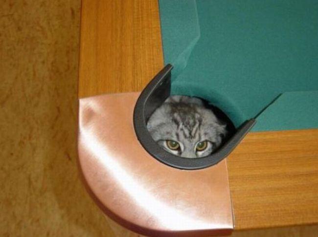 прикольные фото котов и кошек