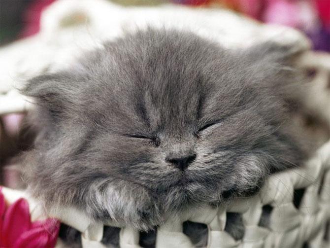 кошки - сладко спит