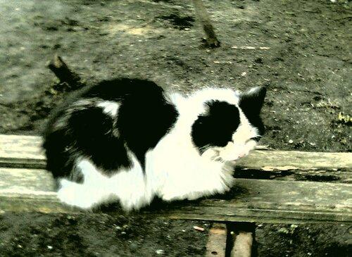 Кот суровый