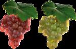 Виноград  0_5a149_25bef534_S