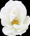 FarmerLisa_SprWhisp_Flower-RoseWhite.png