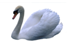 Птицы  разные  0_65dc5_6b2bf379_S
