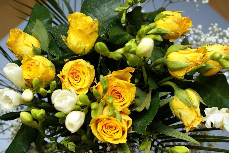 розы LJILJANA