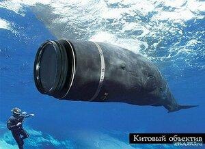 китовый объектив