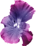 ial_sng_violet6.png