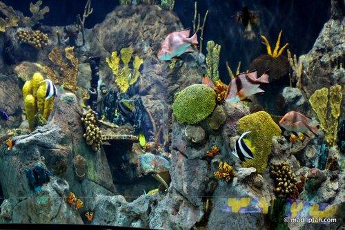 аквариум, лоро парк