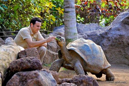 черепаха, кормление, лоро парк