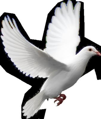 Ptice..... 0_85fdd_d56d5b87_L
