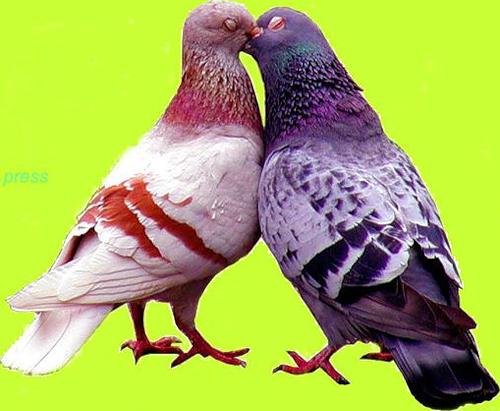 Ptice..... 0_86050_b6dfebc3_L
