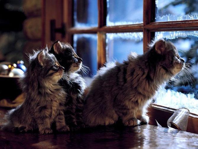 кошки - увидел что-то интересное