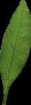 FarmerLisa_SprWhisp_Foliage-Leaf1.png