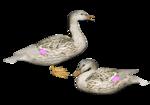 Птицы  разные  0_65eac_372207ea_S