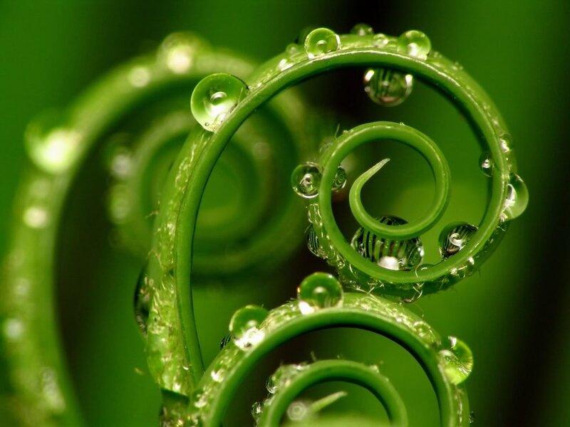 Spirals by Sago Palm