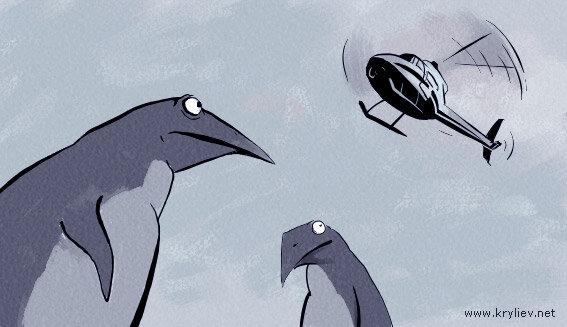 Посмотреть пингвинов в сочи - 570
