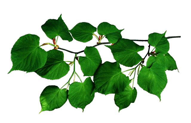 Пишут обычно угольком, мелом или красной краской. интересующих вас людей на листьях какого-либо растения и бросьте их...