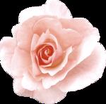 Vintage_Roses_Lilas_el (40).png