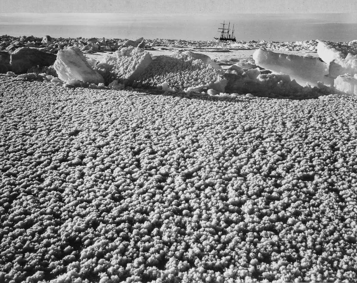36. «Ледяные цветы», образовавшиеся на льду возле «Эндьюранса».