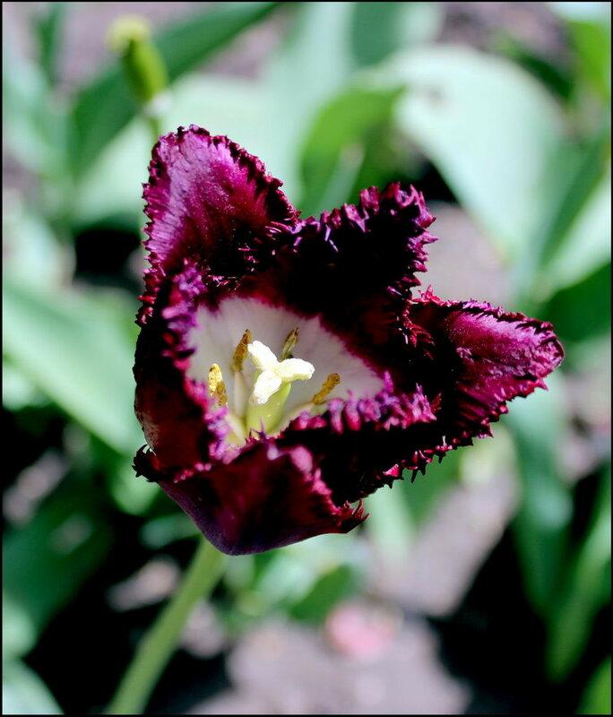Flores 0458.JPG