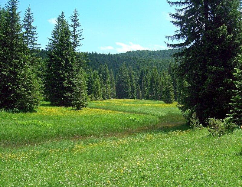 дрожжевом картинки с лиственным лесом поляне шары сферы станут