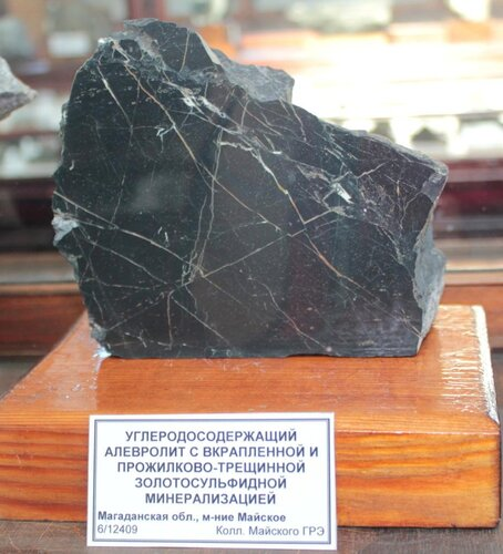 Углеродосодержащий алевролит с вкраплённой и прожилково-трещинной золотосульфидной минерализацией