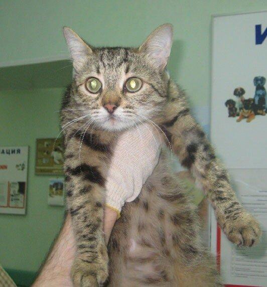 Муся - героическая кошка