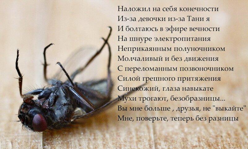 Стихотворный мух