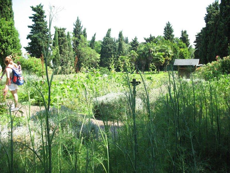 В Парке Сигурта.Огород пряных и лекарственных растений.