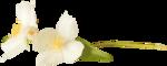 NLD Flower 10.png